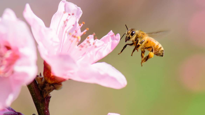 Adottare una colonia di api